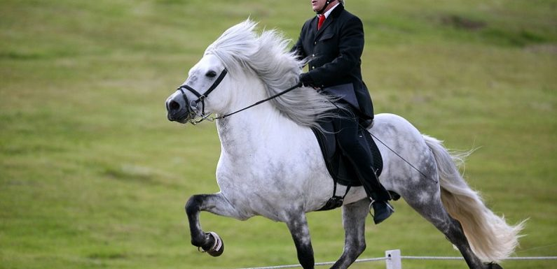 Some Simple Riding Rules For An Enjoyable Horse Ride
